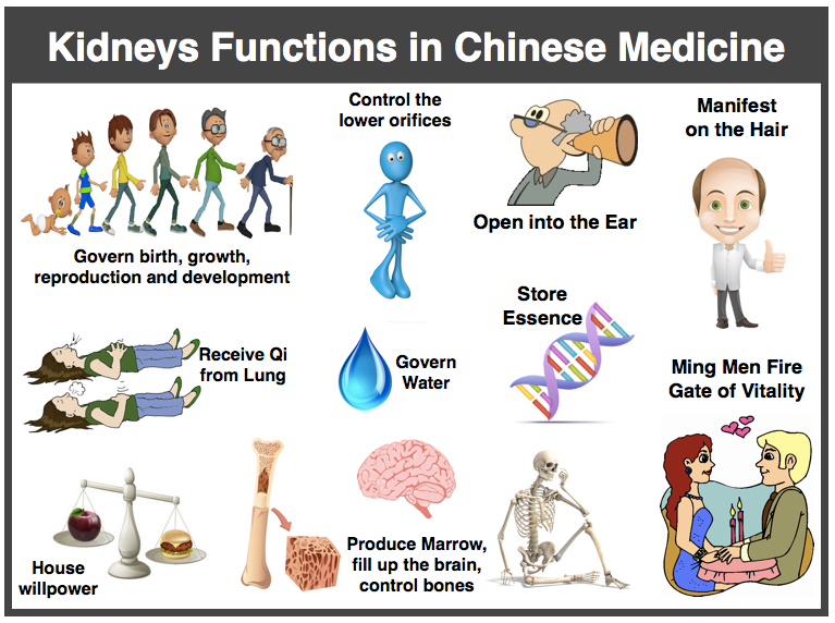 TCM-Kidney-functions